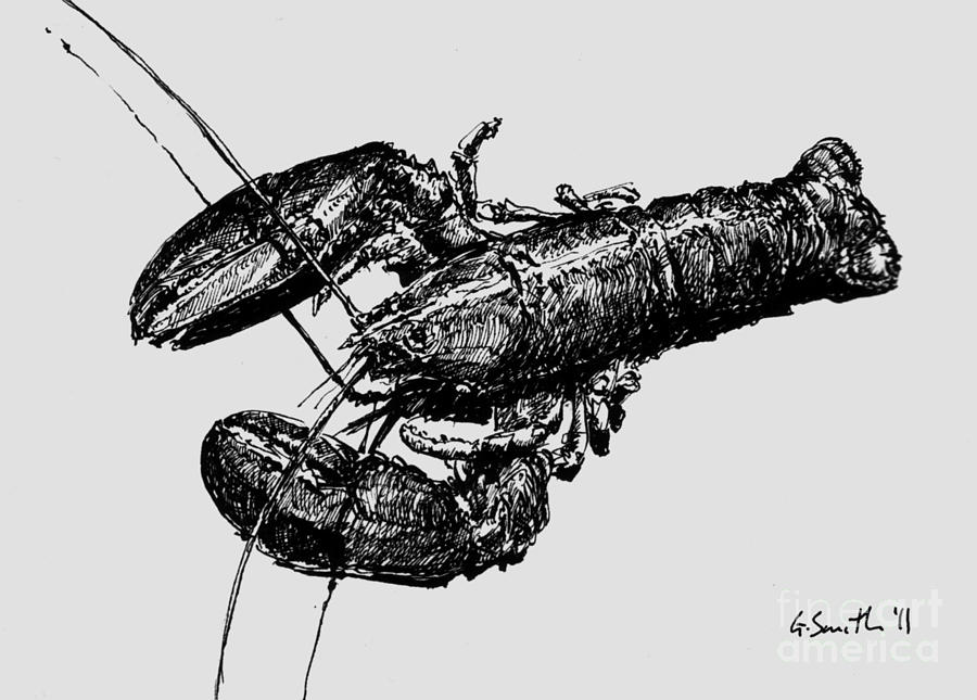 lobster sketch lobster 01 drawing by gary smith sketch lobster