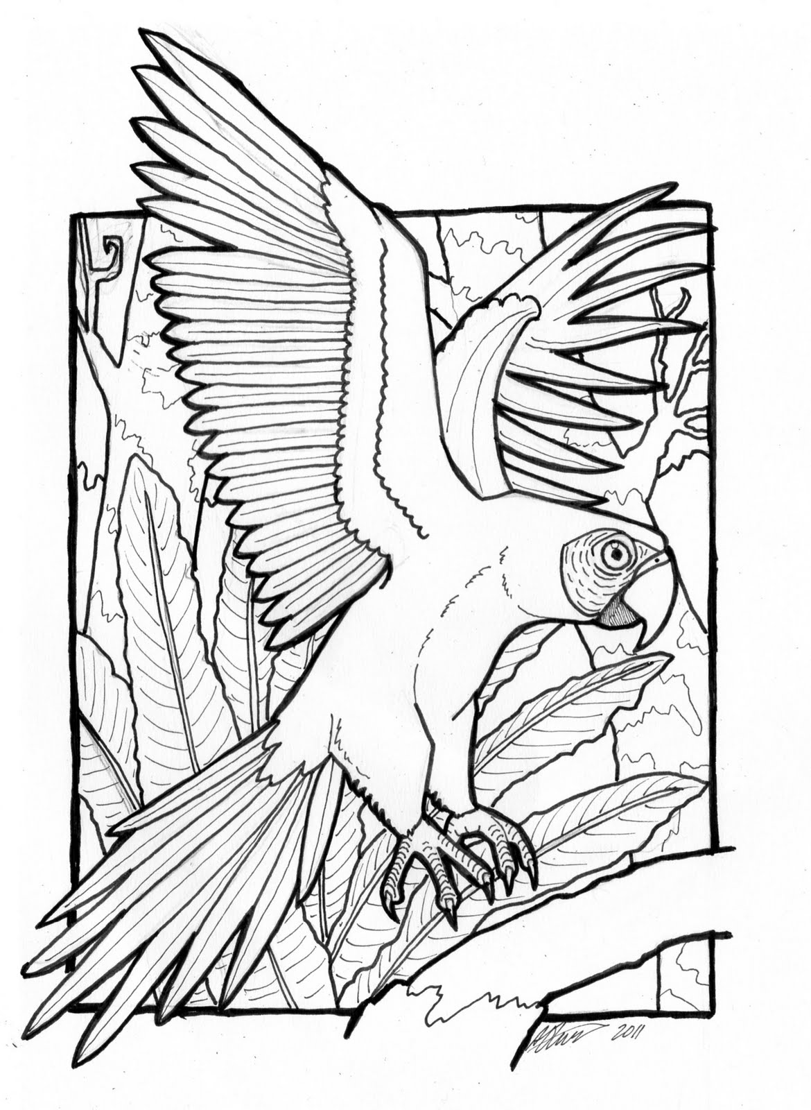 macaw coloring pages two macau parrot coloring page download print online macaw pages coloring