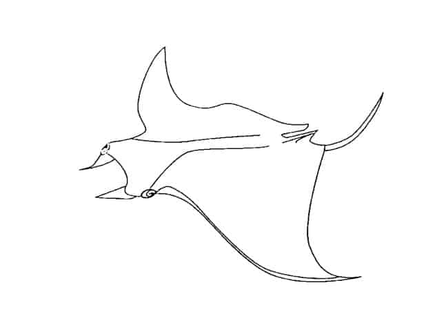 manta ray outline download manta ray coloring for free designlooter 2020 manta ray outline