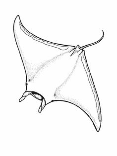 manta ray outline ray coloring pages at getdrawings free download outline manta ray
