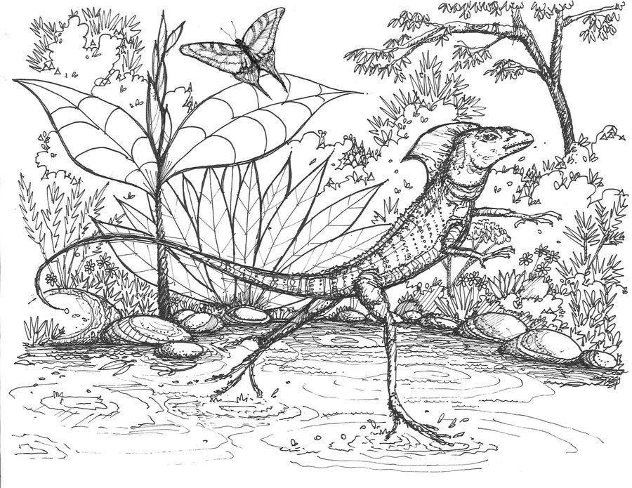 marvel lizard coloring pages coloring pages basilisk lizard printable for kids coloring pages lizard marvel
