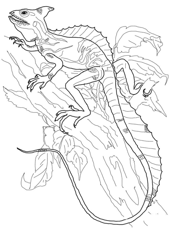 marvel lizard coloring pages coloring pages coloring pages basilisk lizard printable lizard marvel coloring pages