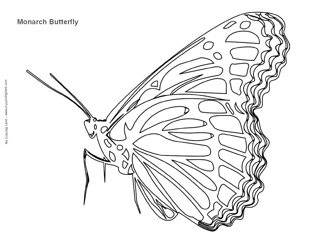 monarch caterpillar coloring page monarch caterpillar drawing at getdrawings free download coloring page caterpillar monarch