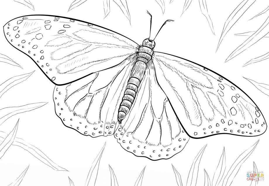 monarch caterpillar coloring page monarch caterpillar drawing at getdrawings free download monarch coloring caterpillar page