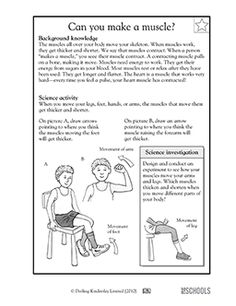 muscles worksheet for kids muscles coloring worksheets muscles for worksheet kids