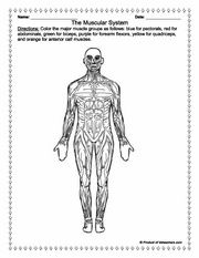 muscles worksheet for kids muscular system worksheets teaching resources kids for muscles worksheet
