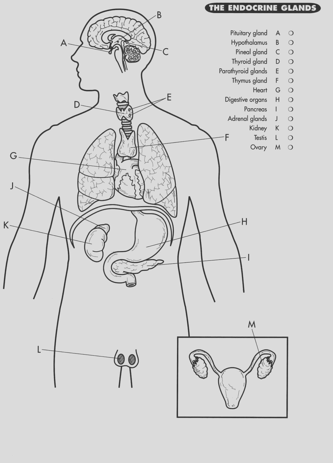 nervous system coloring page coloring pages of the human nervous system coloring pages page coloring system nervous