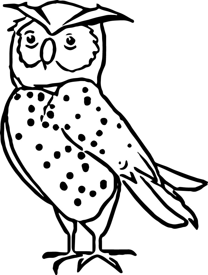 nocturnal animals coloring sheets coloring pictures of nocturnal animals in 2020 animal sheets nocturnal animals coloring