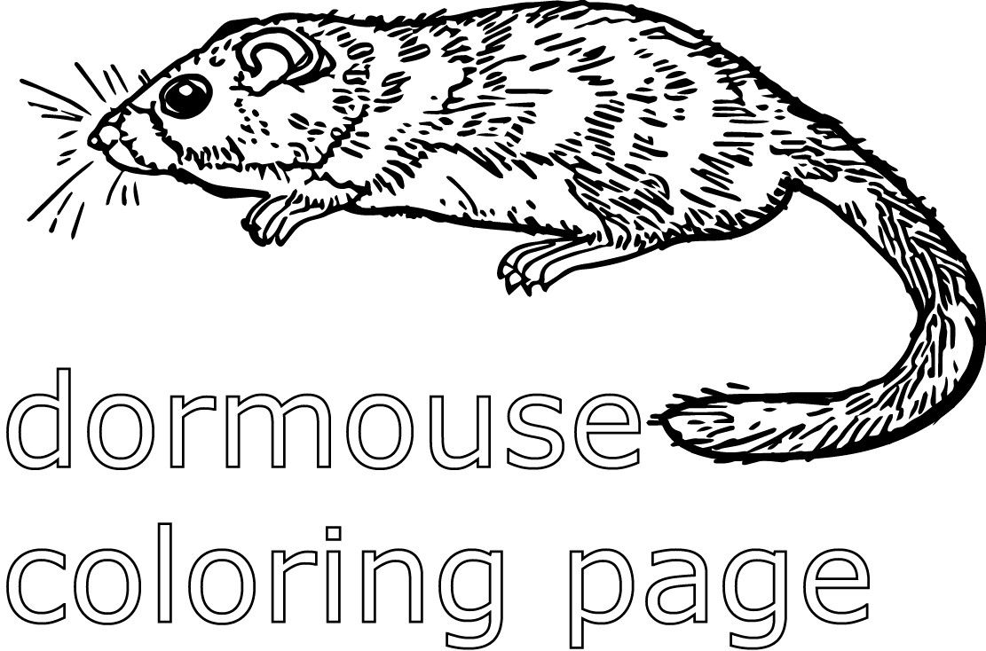 nocturnal animals coloring sheets free coloring pages of nocturnal animals coloring page blog sheets nocturnal animals coloring