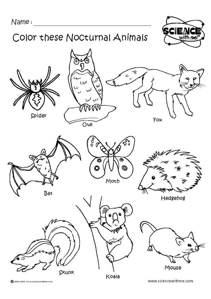 nocturnal animals coloring sheets pictures of nocturnal animals coloring home sheets animals nocturnal coloring