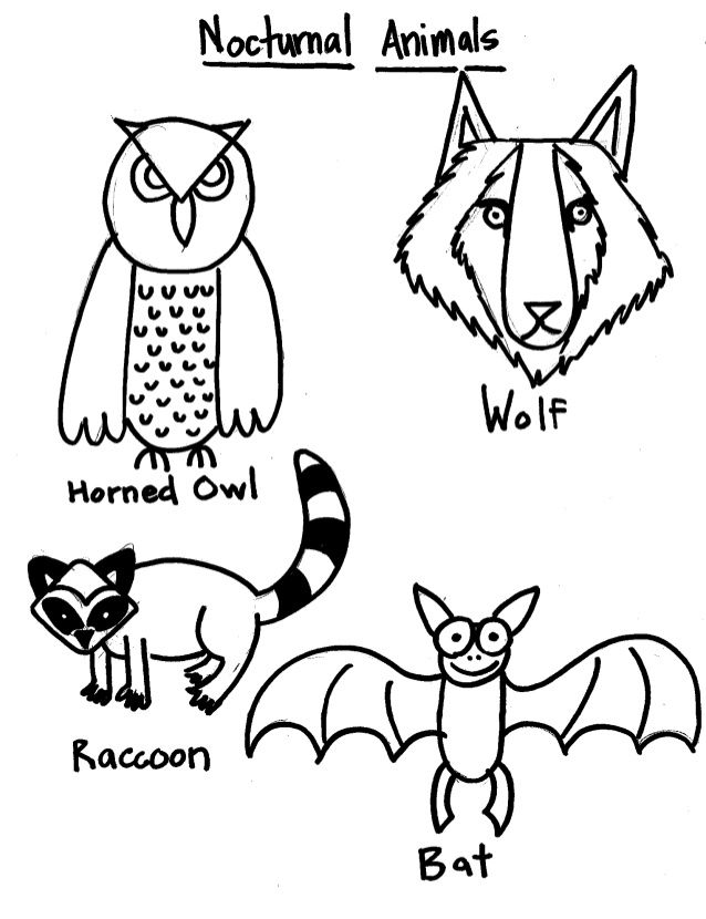 nocturnal animals colouring childhood education nocturnal animals coloring pages free animals nocturnal colouring
