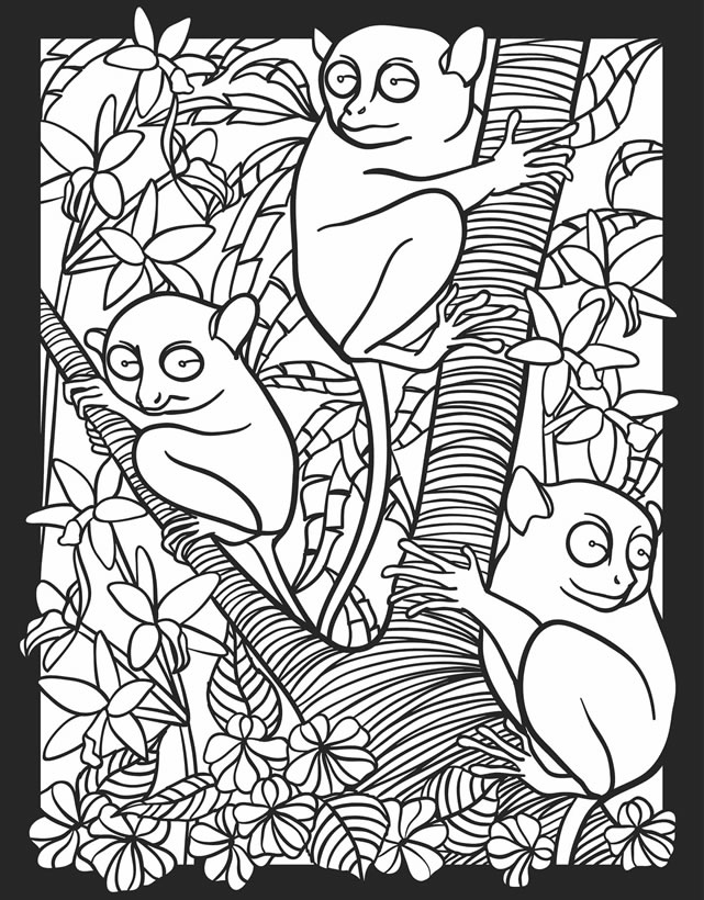 nocturnal animals colouring pictures of nocturnal animals coloring home nocturnal animals colouring
