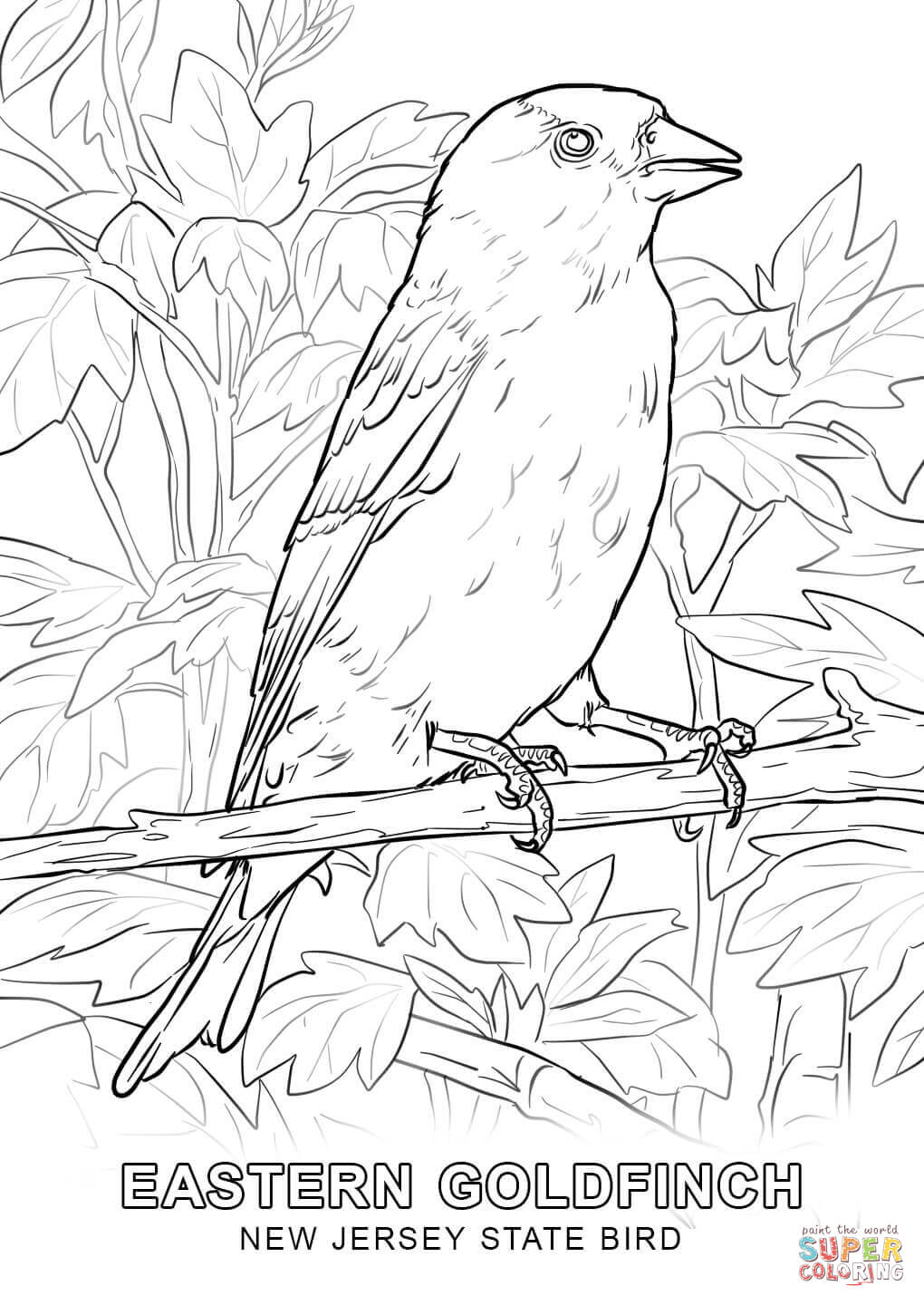 north carolina state bird picture connecticut state bird coloring page free printable north bird carolina picture state