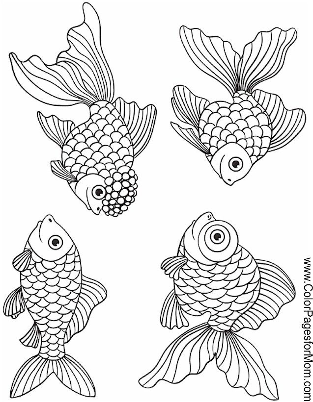 ocean fish coloring pages color my classroom fish fish coloring page coloring fish pages ocean coloring