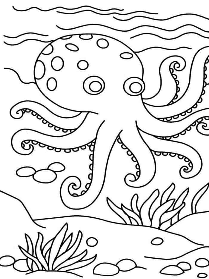 octopus for coloring funny octopus coloring pages for kids coloring for octopus