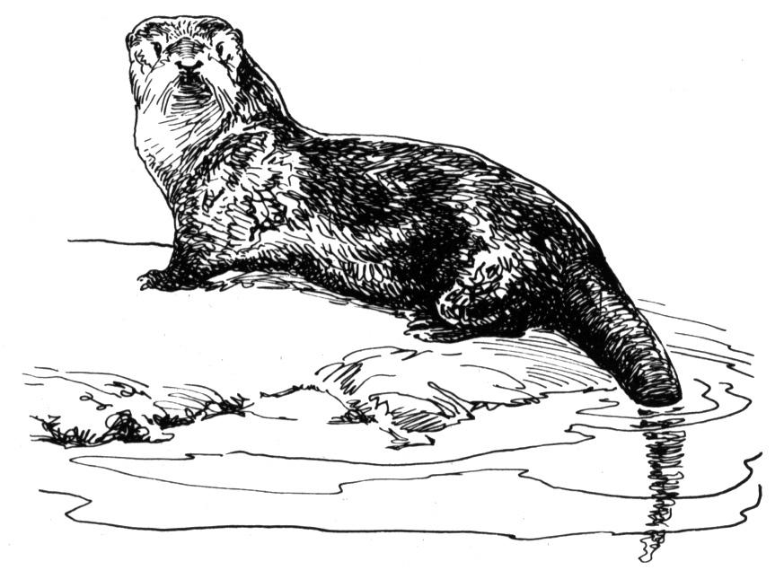 otter coloring page free otter coloring pages coloring page otter