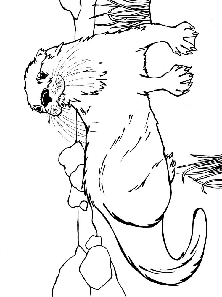 otter coloring page free otter coloring pages download and print otter coloring otter page 1 1