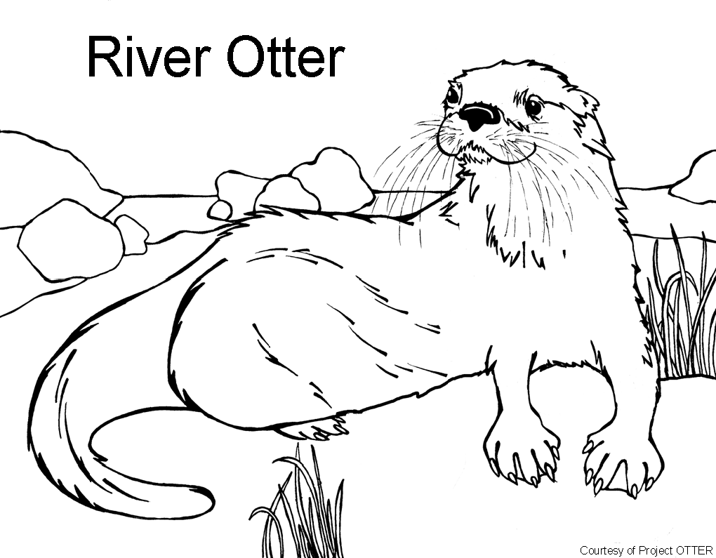 otter coloring page o is for otter coloring page coloring home coloring page otter
