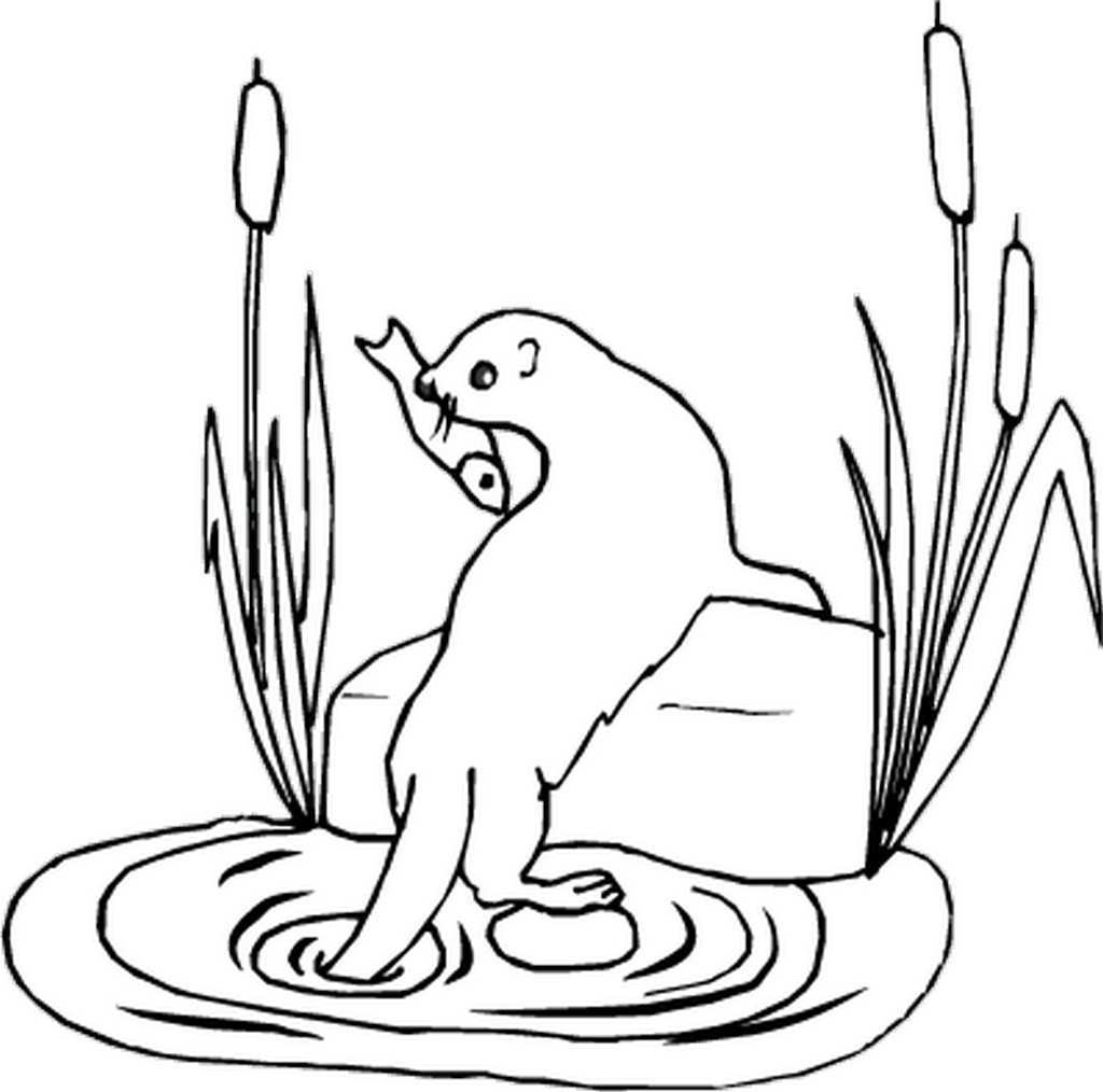 otter coloring page river otter drawing free download on clipartmag otter coloring page