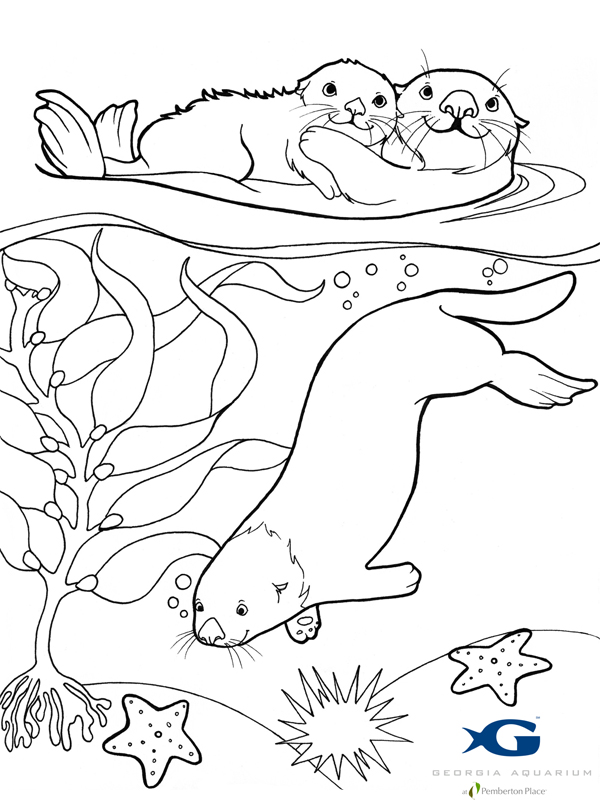 otter coloring page sea otter awareness week 2012 jen richards page otter coloring