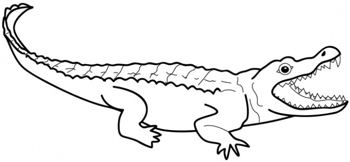 outline picture of crocodile crocodile outline drawing at getdrawings free download crocodile of outline picture