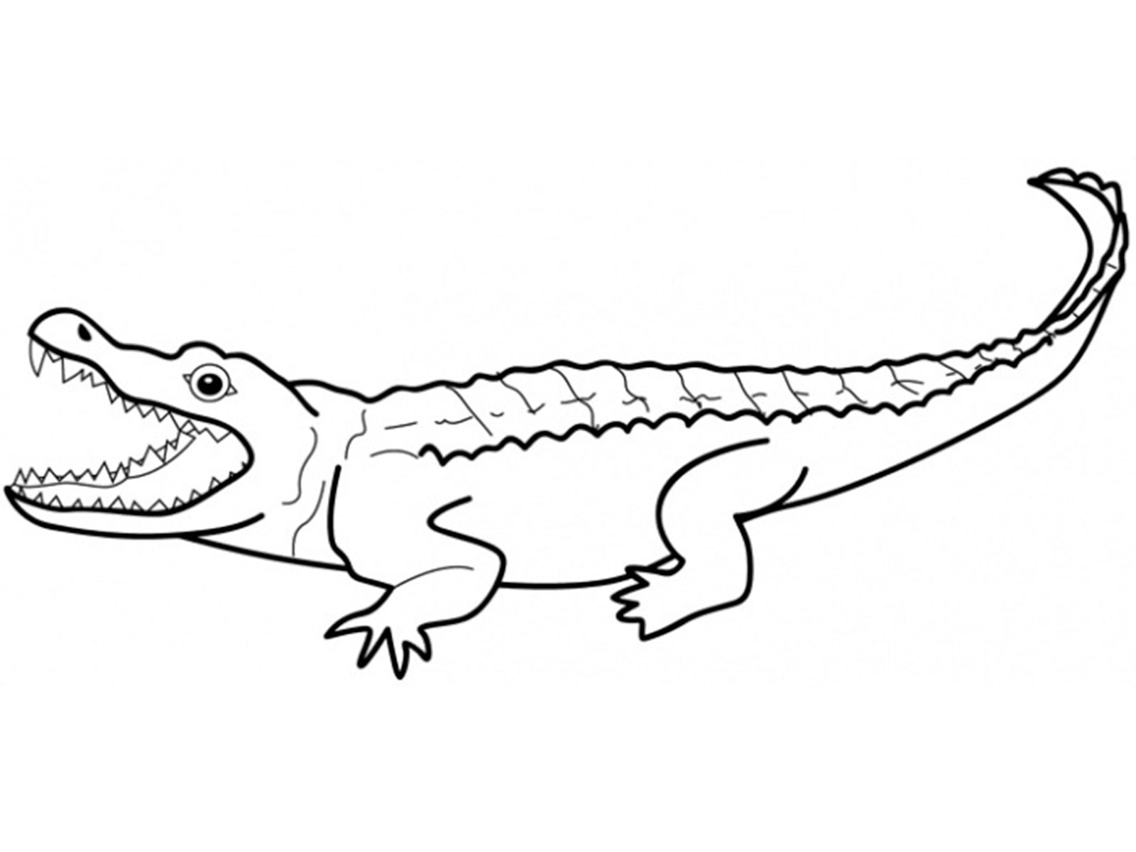 outline picture of crocodile crocodile outline free download on clipartmag outline of crocodile picture