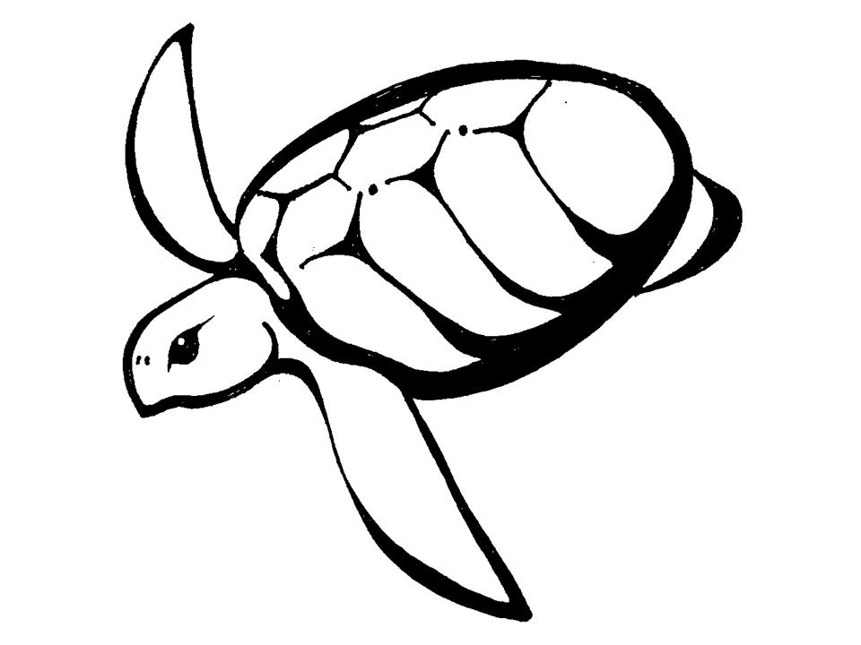 outline picture of tortoise background of a turtle outline tattoo illustrations of outline picture tortoise
