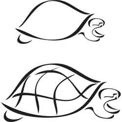 outline picture of tortoise hawaiian turtle outline free download on clipartmag of tortoise picture outline