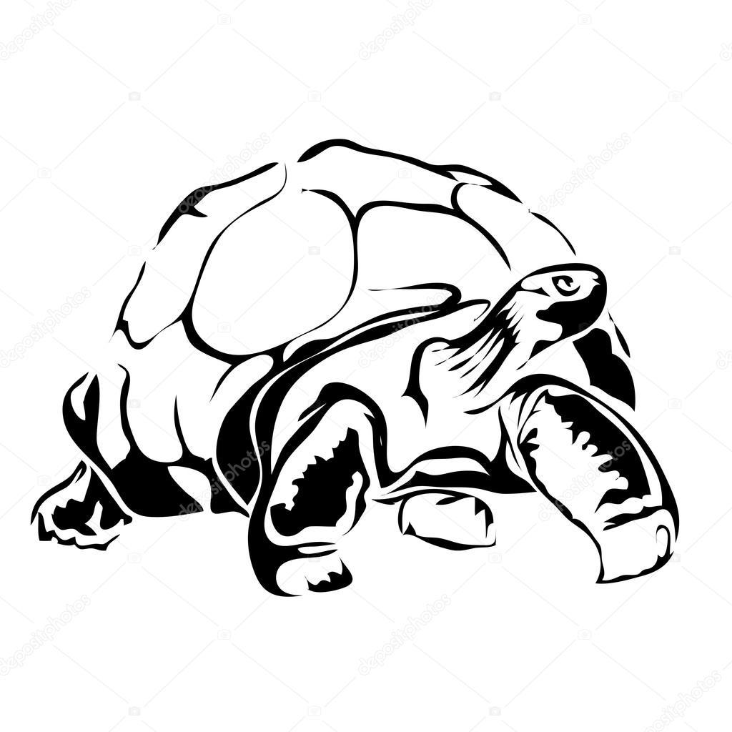 outline picture of tortoise outline picture of tortoise outline tortoise picture of