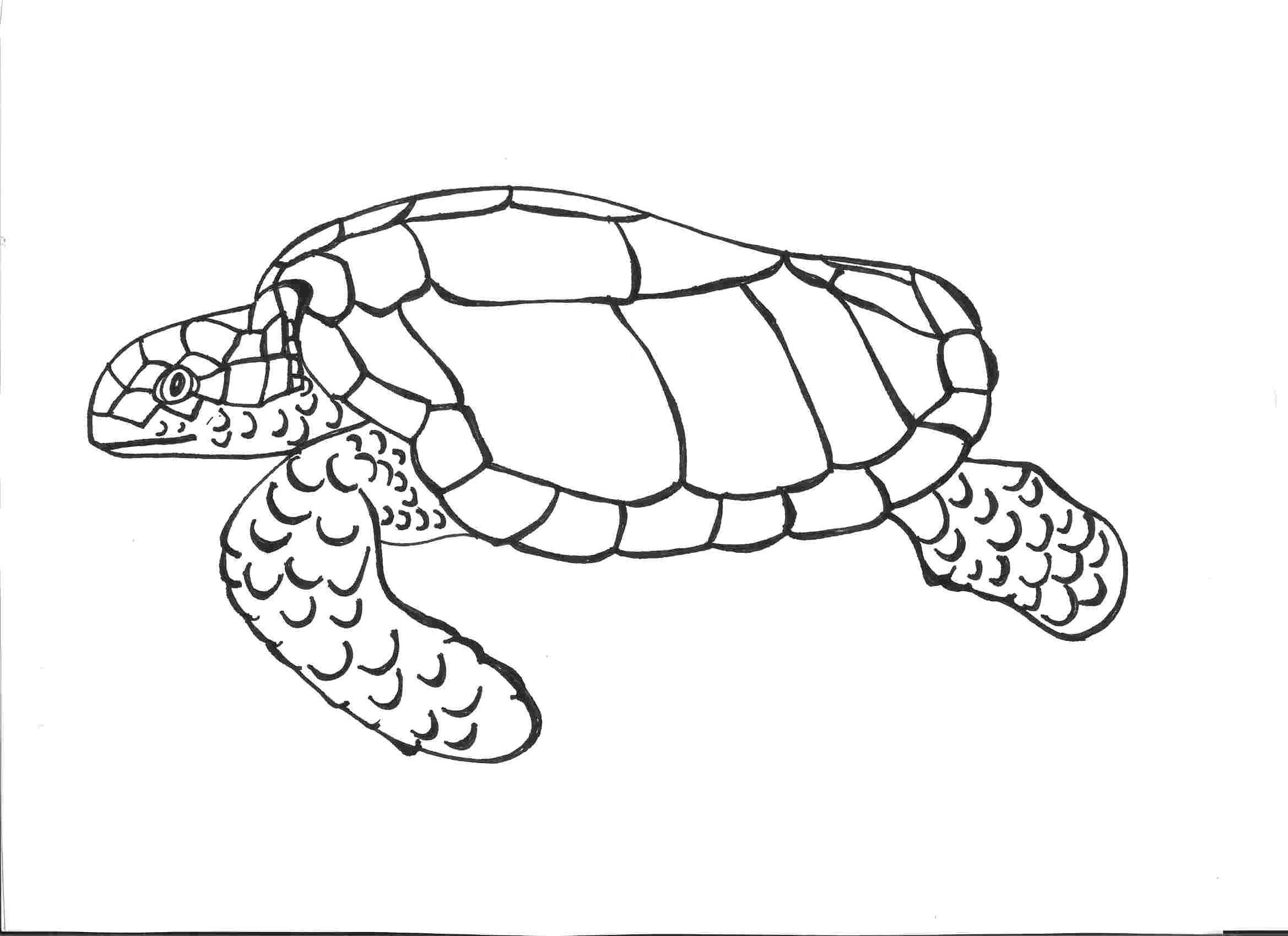 outline picture of tortoise sea turtle outline png free sea turtle outlinepng of outline tortoise picture