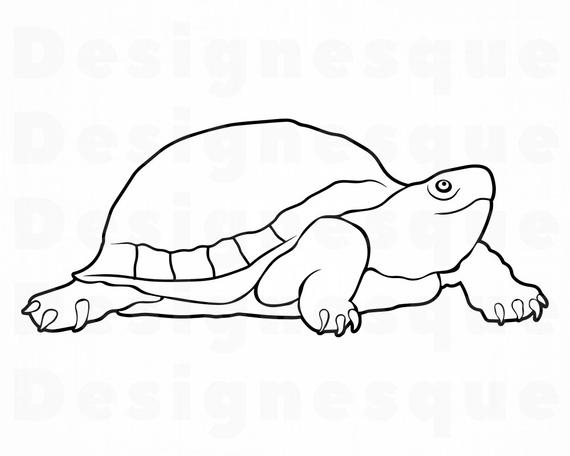 outline picture of tortoise tortoise outline picture for print and coloring raskraska of tortoise outline picture