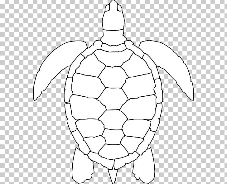 outline picture of tortoise turtle drawing easy at getdrawingscom free for personal of outline tortoise picture