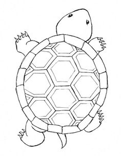 outline picture of tortoise turtle drawing outline at getdrawings free download of tortoise outline picture