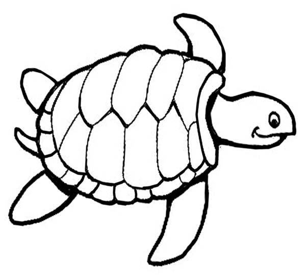 outline picture of tortoise turtle outline drawing at getdrawings free download of picture outline tortoise