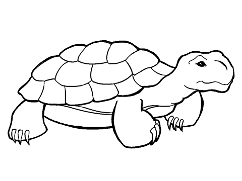 outline picture of tortoise turtle outline drawing at getdrawings free download tortoise of picture outline