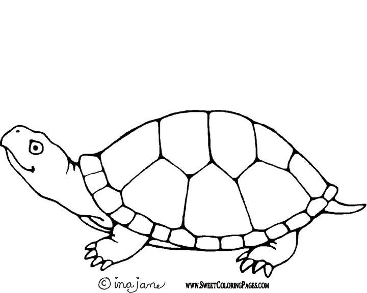 outline picture of tortoise turtle outline drawing at paintingvalleycom explore outline picture of tortoise