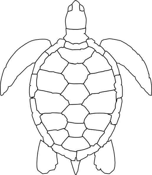 outline picture of tortoise turtle outline picture for coloring picture outline of tortoise