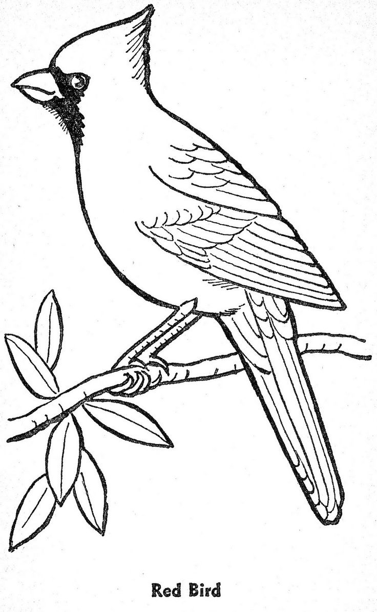 outline pictures to colour bird patterns to trace coloring home pictures to outline colour