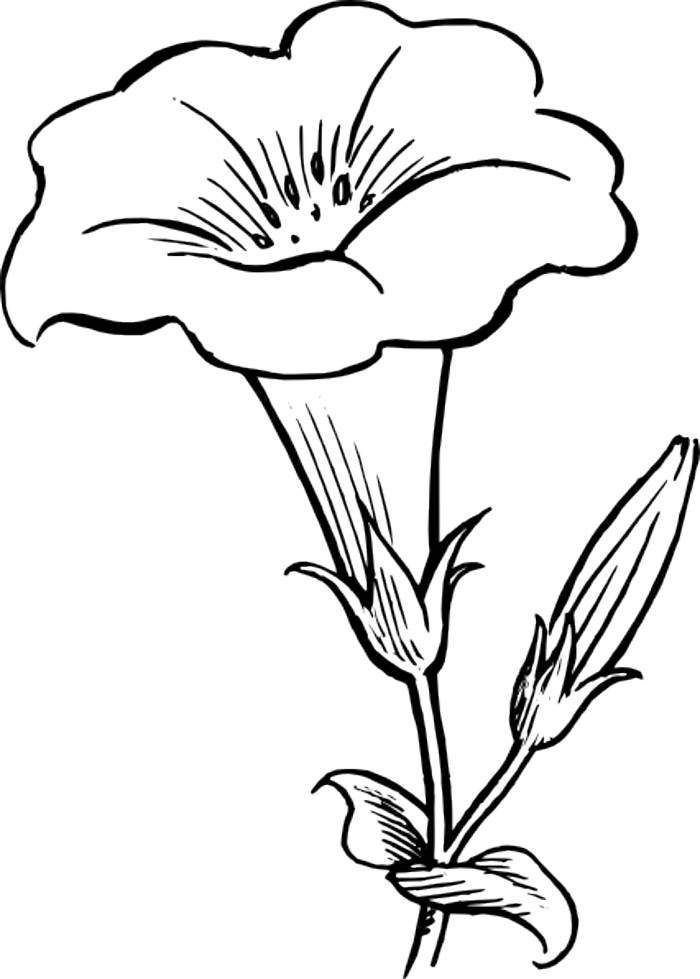 outline pictures to colour free simple flower outline download free clip art free to pictures colour outline