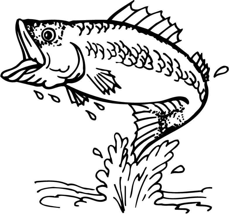 outline pictures to colour free swan coloring pages to outline pictures colour
