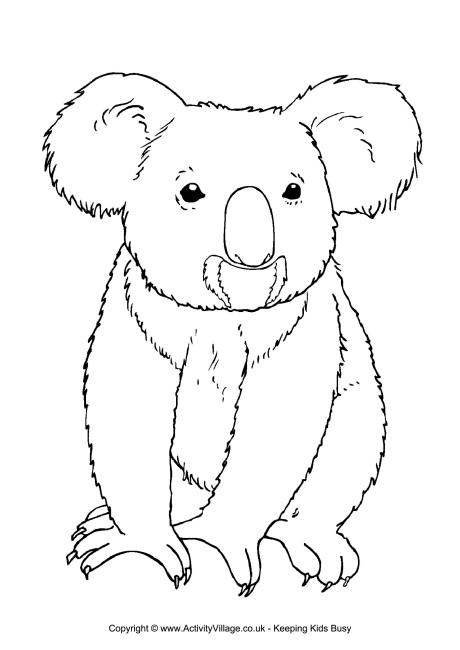 outline pictures to colour koala colouring page 3 colour outline to pictures