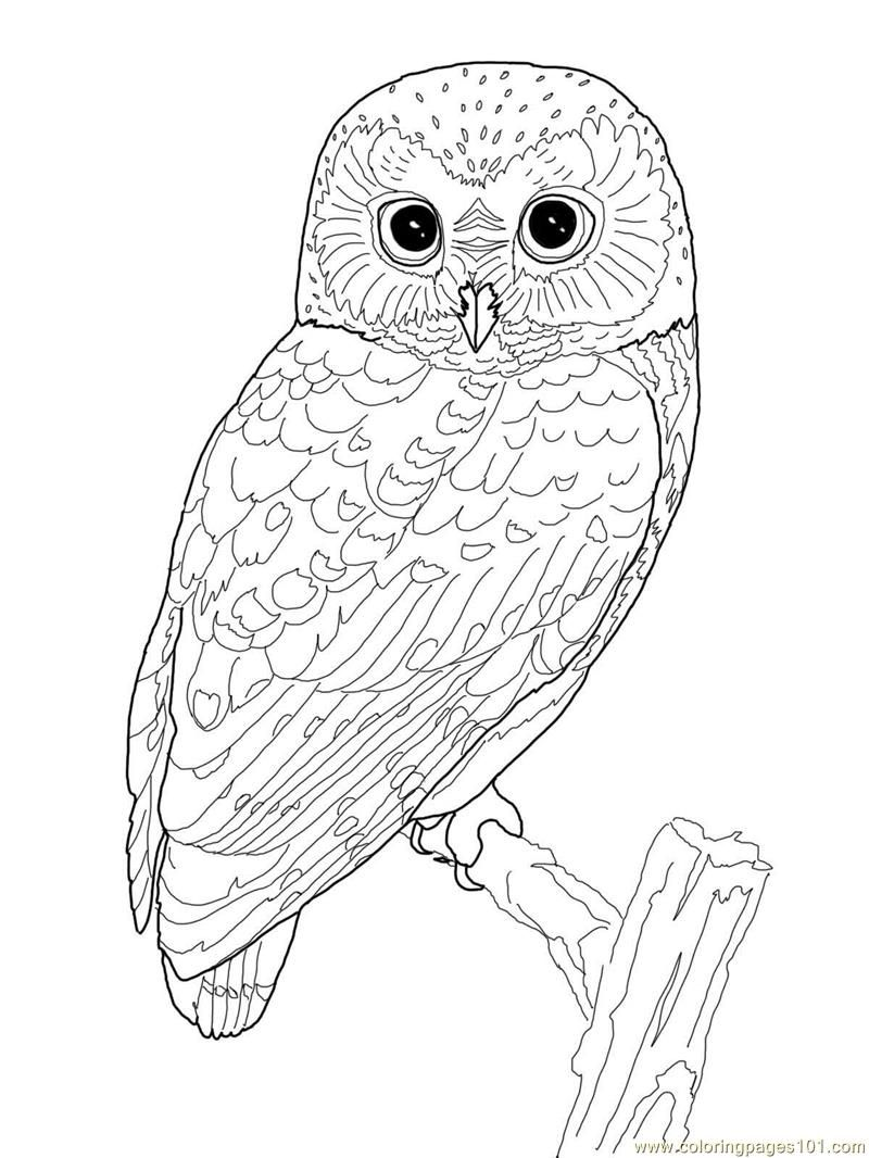 owl coloring pages for girls coloring pages for girls owls at getcoloringscom free pages for coloring girls owl
