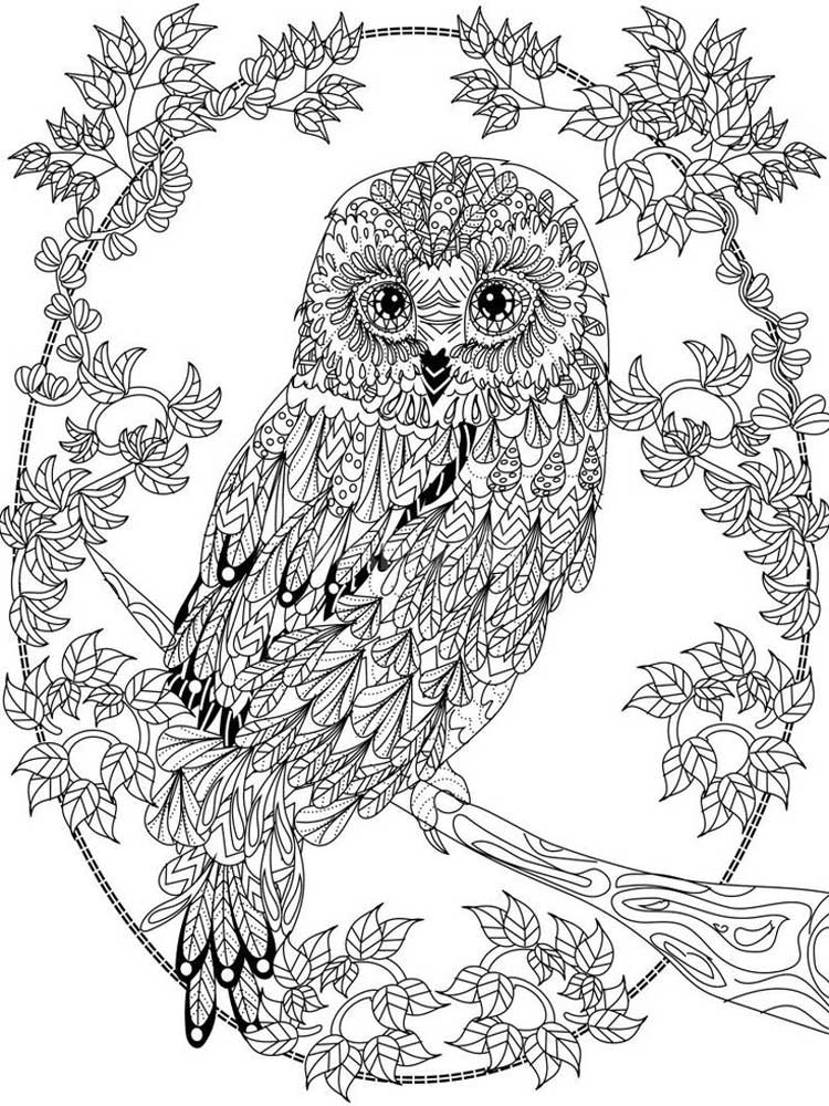 owl coloring picture free owl coloring pages coloring owl picture