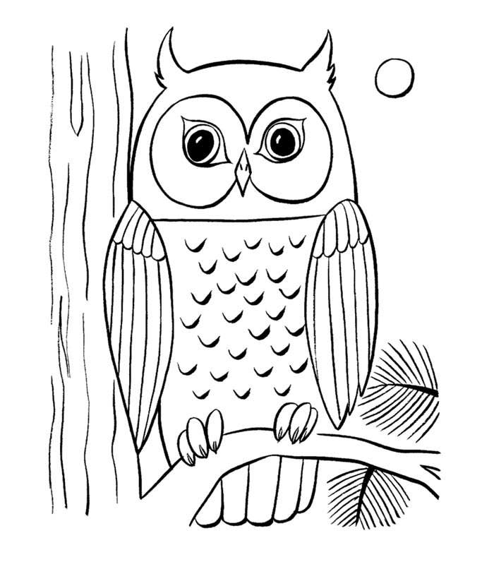 owl colouring pictures owl coloring pages owl colouring pictures