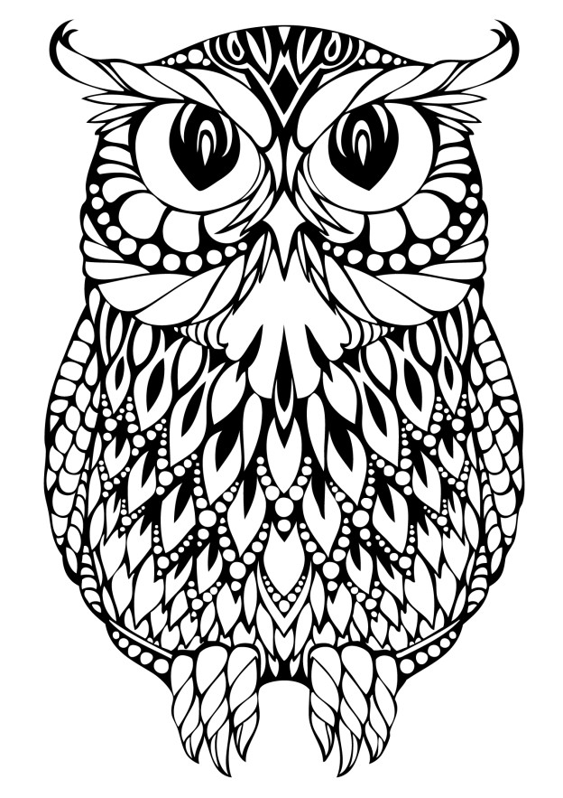 owl picture to color januari 2012 picture color to owl