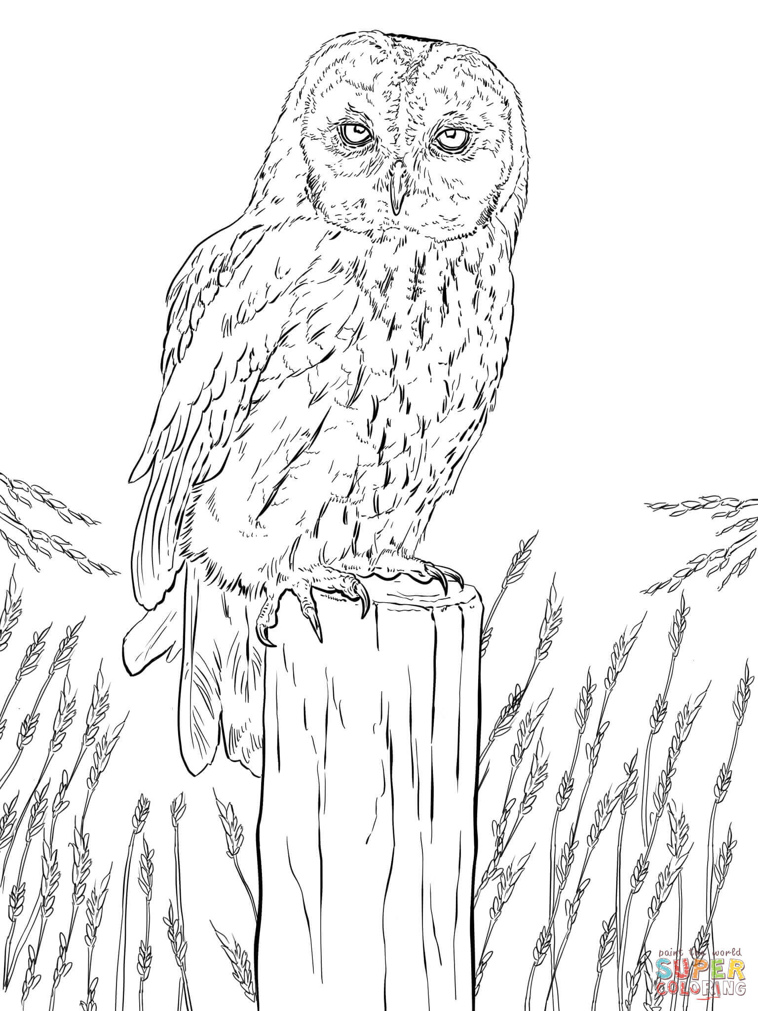 owl picture to color owls animal coloring pages pictures color to owl picture