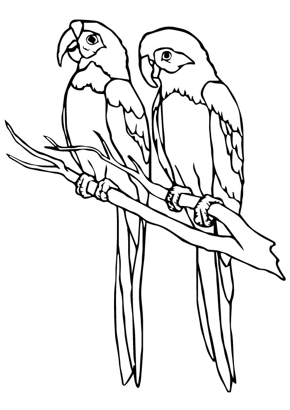 parrot to color african parrot printable coloring sheet topcoloringpagesnet color to parrot