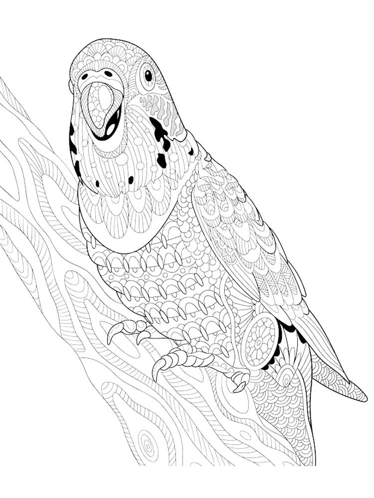 parrot to color coloring picture of animals for kids parrot to color