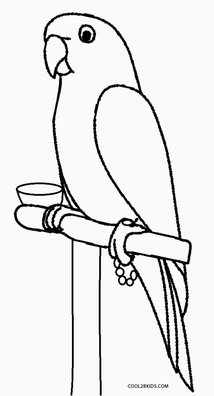 parrot to color cute animal coloring pages best coloring pages for kids parrot to color