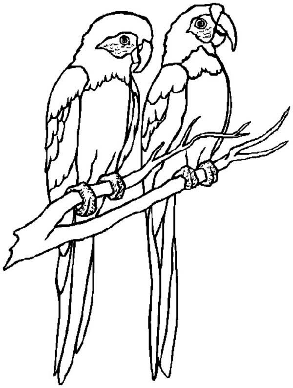 parrot to color free parrot coloring pages for adults printable to color to parrot